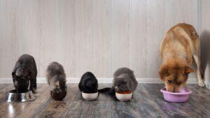 Dwa psy oraz 3 koty jedzące ze swoich misek
