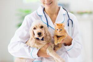 Lekarz weterynarii trzymający na rękach młodego psa oraz rudego małego kotka